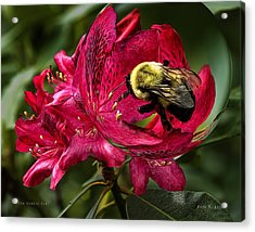 The Bumble Bee Acrylic Print by Mark Allen