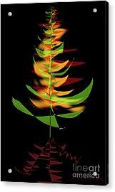 The Burning Bush Acrylic Print