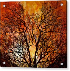 The Burning Bush Acrylic Print by Lynn Andrews