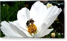 Acrylic Print featuring the photograph The Busy Bee by Carol Grimes