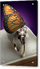The Butterfly And The Engagement Ring Acrylic Print by Yuri Lev