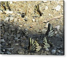 The Butterfly Dance Acrylic Print