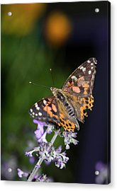 Acrylic Print featuring the photograph The Butterfly Effect by Alex Lapidus