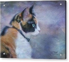 Acrylic Print featuring the digital art The Calico Staredown  by Colleen Taylor