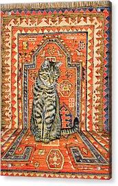 The Carpet Cat Acrylic Print by Ditz