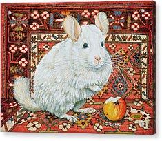 The Carpet Chinchilla Acrylic Print by Ditz