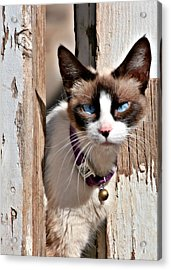 The Cat A Purrfect Carnivore Acrylic Print by Christine Till