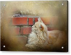 The Cat And The Mouse Acrylic Print