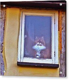 The Cat In The Window Acrylic Print