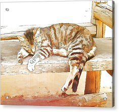 The Cat Is Back Acrylic Print by Jan Hattingh