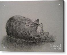The Cat Series II Acrylic Print by Sabina Haas