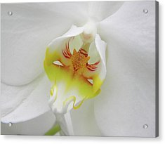 Acrylic Print featuring the photograph The Cat Side Of An Orchid by Manuela Constantin
