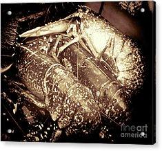 The Catch  Acrylic Print by Baggieoldboy