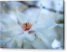 The Center Of Beauty Acrylic Print