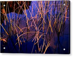 The Center Acrylic Print by Susanne Van Hulst