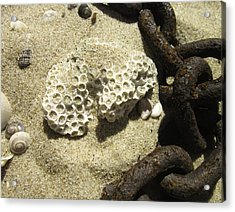 The Chain And The Fossil Acrylic Print by Trish Tritz