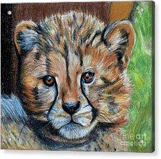 The Cheetah Cub Acrylic Print by Jill Van Iperen