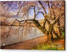 The Cherry Blossom Festival Acrylic Print by Lois Bryan