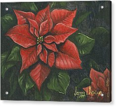 The Christmas Flower Acrylic Print