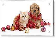 The Christmas Tree Destroyers Acrylic Print