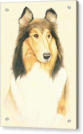 The Collie Acrylic Print