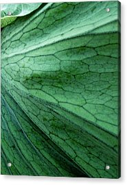The Color Green Acrylic Print by Gwyn Newcombe