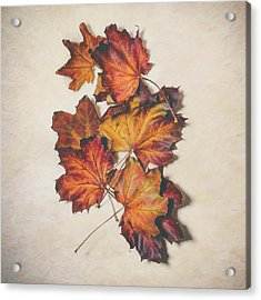 The Colors Of Fall Acrylic Print by Scott Norris