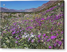 The Colors Of Spring Super Bloom 2017 Acrylic Print by Peter Tellone