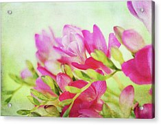 Acrylic Print featuring the photograph Colour Full Freesia by Connie Handscomb