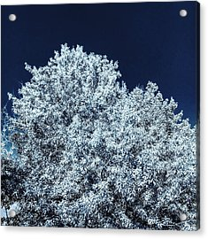 The Contrast Of Yellow And Blue In Bluescale Acrylic Print