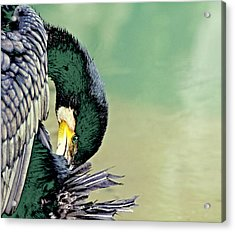 The Cormorant Acrylic Print