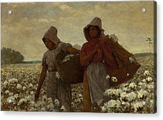 The Cotton Pickers Acrylic Print by Winslow Homer
