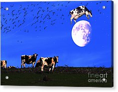 The Cow Jumped Over The Moon Acrylic Print by Wingsdomain Art and Photography