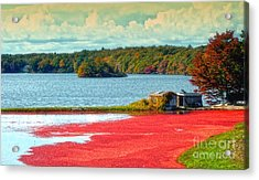 The Cranberry Farm On Cape Cod Acrylic Print by Gina Cormier