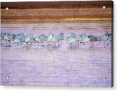The Cranes Of Bosque Acrylic Print