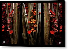 Acrylic Print featuring the photograph The Crimson Forest by Jessica Jenney