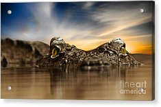 Acrylic Print featuring the photograph The Crocodile by Christine Sponchia