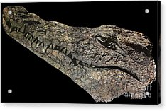 The Crocodile Acrylic Print