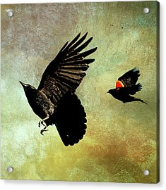 The Crow And The Blackbird Acrylic Print by Peggy Collins