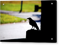 Acrylic Print featuring the photograph The Crow Awaits by Karol Livote
