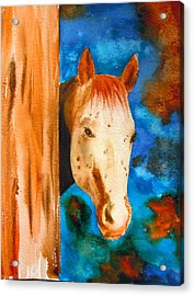 The Curious Appaloosa Acrylic Print by Sharon Mick