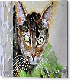 The Curious Tabby Cat Acrylic Print