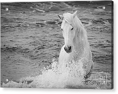 The Curve Of The White Horse Acrylic Print by Carol Walker