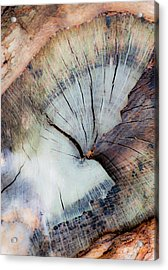 The Cut Acrylic Print by Stephen Anderson