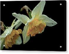 The Daffodil Acrylic Print