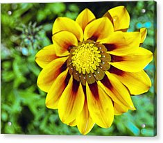 Acrylic Print featuring the photograph The Daisy by Matthew Bamberg