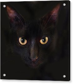 The Dark Cat Acrylic Print