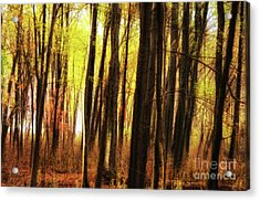 The Dark Forest Mood Acrylic Print by Photo Captures by Jeffery