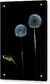 The Darkness Can't Hide You Acrylic Print