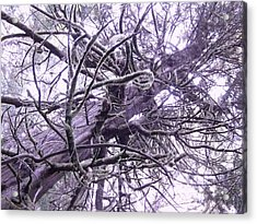 The Deception Tree Acrylic Print by Angi Parks
